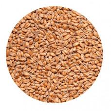 Солод Курский Пшеничный, 1 кг